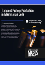 Transient Protein Production in Mammalian Cells